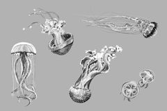 Hand-drawing sketches of jellyfish. Black and white hand-drawing sketches of jellyfish Vector Illustration
