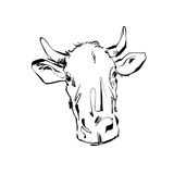 Black and white hand drawn cow, illustration of a cow. Royalty Free Stock Photos