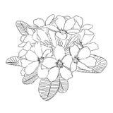 Black and white hand drawn plumeria flower vector illustration Royalty Free Stock Photos