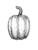 Black and white hand drawn sketch of a pepper Stock Images