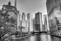 Black and White HDR of Chicago. With Ohio River, Archtiecture, and Trees Royalty Free Stock Photo