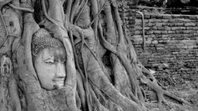 Black and White head of Buddha image in tree roots at Wat Mahath stock photo