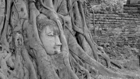 Black and White head of Buddha image in tree roots at Wat Mahath stock photos