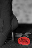 Black and white high heel. High heel with red rose Stock Images