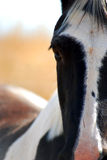 Black and White Horse Royalty Free Stock Image