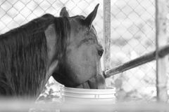 Black and white horse Stock Photo