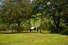 Black and white horse behind the fence in green park Royalty Free Stock Photo