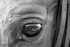Black & White Horse Eye. Close Up of Arabian Horse's Eye in Black & White Royalty Free Stock Photos