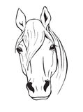 Black and white horse head Stock Images