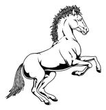 Black and white horse illustration Stock Photos