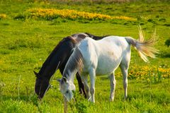 Black and white horse on meadow stock photo