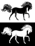 Black and white horses. Black and white purebred horses with luxurious manes Royalty Free Stock Photos
