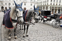 Black and white horses and carriage Stock Images
