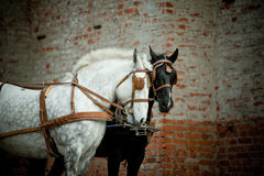 Black and white horses carriage Stock Image