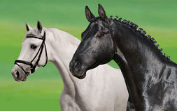 Black & white horses. On green royalty free stock image