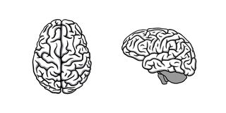Black & white human brain in two perspectives illustration Royalty Free Stock Photo