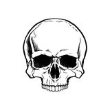 Black and white human skull. Without a lower jaw Royalty Free Stock Photography