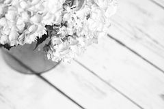Black and white hydrangeas in a vase. Hydrangeas in a vase on wood floor upper left Royalty Free Stock Images