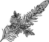 Black and white illustration of a evergreen branch. Bumps on a branch stock illustration