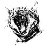 Black and white illustration with a cat Stock Photo