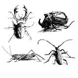 Black and white illustration with different bugs Stock Photos