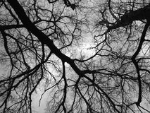 Abstract tree. Black and white image with abstract tree concept Stock Image