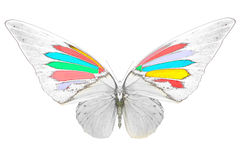 Black and white image of beautiful butterfly with colorful wings. Black and white image of butterfly with colorful wings. Invert image on white background stock images