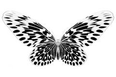 Black and white image of beautiful butterfly with colorful wings Stock Images