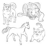 Black and white image of a cat, dog, horse and tiger Royalty Free Stock Photos