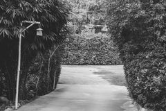 Black and white image concrete footpath or walkway flanked with green trees that going to outdoor car parking lot. Royalty Free Stock Photography