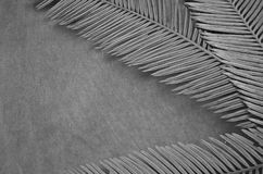Black and white image of cycad leaves and towel. Black and white image of cycad leaves on towel background Stock Photo