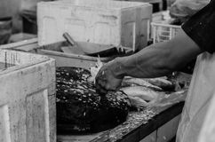 Black and white image of fresh market scene in Malaysia, fish monger clening his fish. Before selling activity.image may contain noise and grain Stock Photos