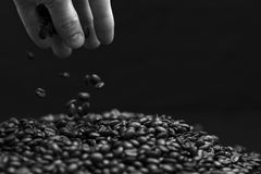 Black and white image of hand grabbing coffee beans. High contrast black and white image of hand grabbing coffee beans with some being dropped onto a pile with stock image