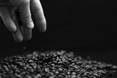 Black and white image of hand grabbing coffee beans. High contrast black and white image of hand grabbing coffee beans with some being dropped onto a pile with stock images