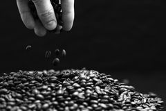 Black and white image of hand grabbing coffee beans. Stock Image