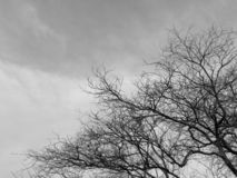 Black and white image of the lonely desolated trees,  with moody stormy sky in the background. Black and white image of the lonely desolated trees,  with royalty free stock photography