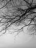 Black and white image of the lonely desolated trees,  with moody stormy sky in the background. Black and white image of the lonely desolated trees,  with stock images
