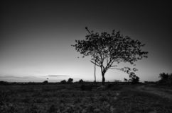 Black and white image of the lonely desolated trees,  with moody stormy sky in the background. Black and white image of the lonely desolated trees,  with stock photography