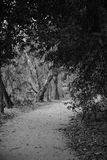 Black and White Image Of Pathway In A Forest. A pathway into a forest entered through an arch of trees, converted to black and white to add to the mystery and Royalty Free Stock Photo