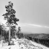 Tree on the mountain Royalty Free Stock Photo