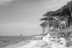 Black and white image of the western beach on the peninsula Darss at Mecklenburg- Western Pomerania, Germany Royalty Free Stock Photo