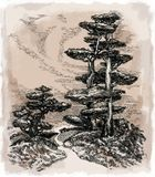 A beautiful tree, a drawing. Drawing  deciduous tree in the style of bonsai. Black-and-white ink drawing of a beautiful tree for illustration of a story Stock Photography