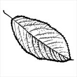 Black and white, isolated, leaf tree Royalty Free Stock Images