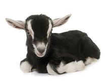 Black and white kid stock image