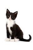 Black-and-white kitten. On a white background Stock Images
