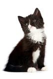 Black-and-white kitten. On a white background Royalty Free Stock Image
