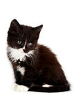 Black-and-white kitten. On a white background Royalty Free Stock Photography