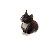Black and White Kitten Stock Photos