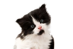 Black and white kitten. On a white background Stock Images