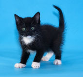 Black and white kitten on blue Stock Photography